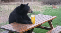 bear-with-beer.png