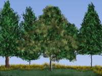 my trees.png