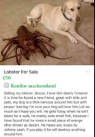 lobster-sale-picture.jpg