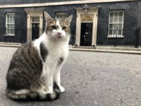 larry-the-downing-street-cat.jpg