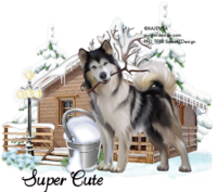 Winter Husky Tag SuperCute855.png