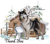 Winter Husky Tag ty966.png