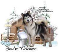 Winter Husky Tag yw1188.png